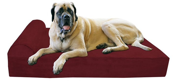 orthopedic dog bed