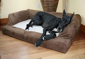 best cheap dog bed
