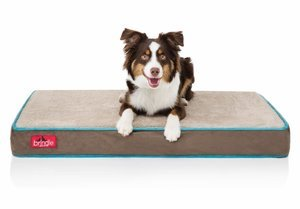 Best Memory Foam Dog Bed for Small Dogs