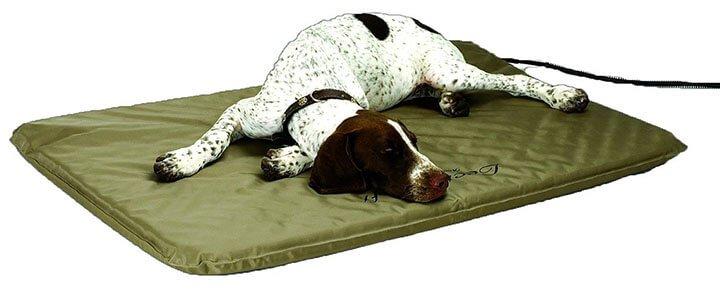 heated dog beds
