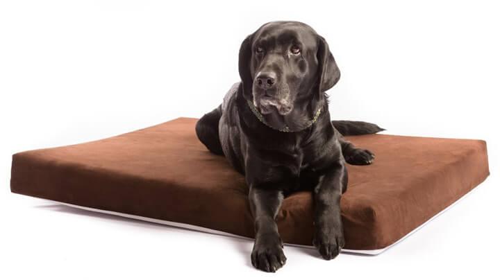 best dog beds for lab