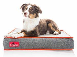 Nesting_dog_mattress