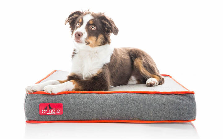 Best Chew Proof Tear Resistant Toughest Dog Bed (October 2019)