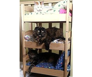 Miniature Bunk Bed for Cats/Dolls/Puppies or Small Dogs (Includes Pillow & Blanket)