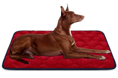 Hero Dog Beds for Labs