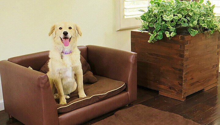 best sofa for dogs