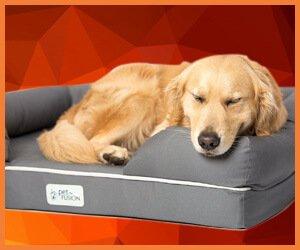 best dog bed for golden retriever 2018
