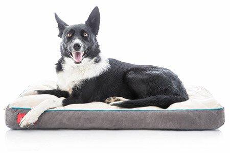 Best Dog Bed For Poodles