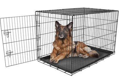 Carlson Pet Metal Dog Crate