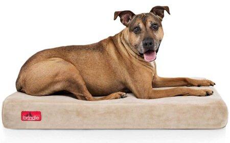 Kuranda Chewproof Dog Bed