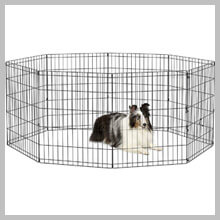 Best Fencing For Small Dogs
