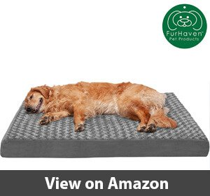 Best Dog Beds For Border Collies
