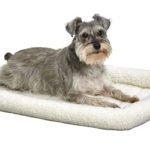 Best Dog Bed for Corgi